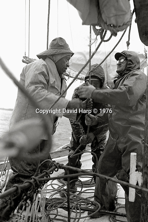 Watermen dredge oysters under sail on the skipjack Rebecca T. Ruark in 1976. Here Martin Pinder, John Banks and Louis Phillips raise the jib