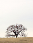 A lone tree on the northeastern Colorado prairie in the Pawnee National Grasslands.