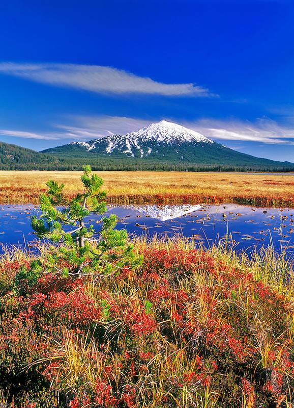 Mt. Bachelor reflection and fall huckleberry. Oregon.