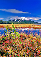 Mt. Bachelor reflection and fall huckleberry. Oregon.