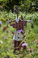 Europe/France/Aquitaine/40/Landes/ Lencouacq: Epouvantail dans le  Jardin Potager de la Ferme Auberge du Jardin de Violette chez Violette Valés - agricultrice et restauratrice