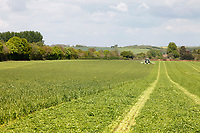 Photo: Richard Lane/Richard Lane Photography. Grass mowing with a Fendt 930 and Krone triple butterfly mower for 1st cut silage. Over Stratton, Somerset. 02/05/2017.