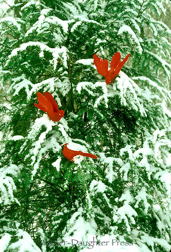 outdoor Christmas tree decorated with handmade wooden cardinals