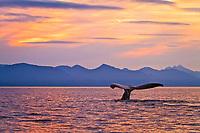 Humpback whale, Megaptera novaeangliae, fluke, Frederick Sound, Alaska, Pacific Ocean