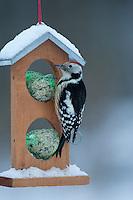 Mittelspecht, Mittel-Specht, Mittlerer Specht, an der Vogelfütterung, Fütterung im Winter bei Schnee, an Häuschen mit Meisenknödel, Fettfutter, Winterfütterung, Leiopicus medius, Dendrocopos medius, Middle Spotted Woodpecker