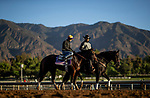 OCT 25: Breeders' Cup Juvenile Fillies entrant Donna Veloce, trained by Simon Callaghan, before working at Santa Anita Park in Arcadia, California on Oct 25, 2019. Evers/Eclipse Sportswire/Breeders' Cup