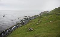 peloton racing along the Irish Sea<br /> <br /> Giro d'Italia 2014<br /> stage 2: Belfast-Belfast <br /> 219km