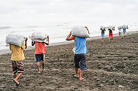 The community of Ostional, Pacific Ocean coast of Costa Rica, runs a project of sustainable use of the olive ridley sea turtles, Lepidochelys olivacea, the eggs, a popular snack in Costa Rica, are harvested during the first days of a large arribada, and bagged for legal and controlled sale throughout the country, men carrying bag loads of turtle eggs off of the beach