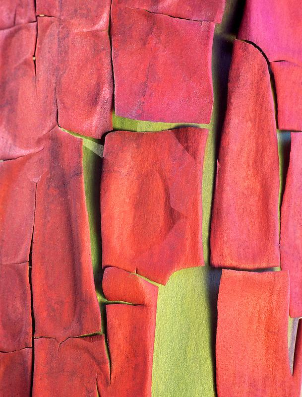 Close up of madrone tree bark. Near Oakridge, Oregon