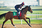 DUBAI,UNITED ARAB EMIRATES-MARCH 29: Desert Encounter,trained by David Simcock,exercises in preparation for the Dubai Sheema Classic at Meydan Racecourse on March 29,2018 in Dubai,United Arab Emirates (Photo by Kaz Ishida/Eclipse Sportswire/Getty Images)