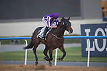 DUBAI,UNITED ARAB EMIRATES-MARCH 31: (4) Mendelssohn,ridden by Ryan Moore,wins the Dubai World Cup at Meydan Racecourse on March 31,2018 in Dubai,United Arab Emirates (Photo by Michael McInally/Eclipse Sportswire/Getty Images)