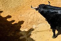 A fighting bull kept in the corral behind the bullfighting arena before Corida de Toros, Torremolinos, Spain, 28 July 2006.