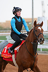 Track Work: February 19 2021: RED VERDON (USA) Track work from King Abddulaziz Racetrack, Riyadh, Saudi Arabia. Shamela Hanley/Eclipse Sportswire/CSM FEBRUARY 19 2021: The Saudi Cup Preparations.