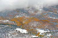 Clearing snow storm and aspen trees in fall, Mosca Pass, Colorado.