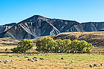 A view from the side of an open car on the TranzAlpine train from Christchurch to Greymouth, on the south island of New Zealand