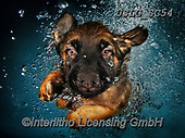 REALISTIC ANIMALS, REALISTISCHE TIERE, ANIMALES REALISTICOS, dogs, paintings+++++SethC_Ramona_IMG_0293work5BOOK2,USLGSC54,#A#, EVERYDAY ,underwater dogs,photos,fotos ,Seth