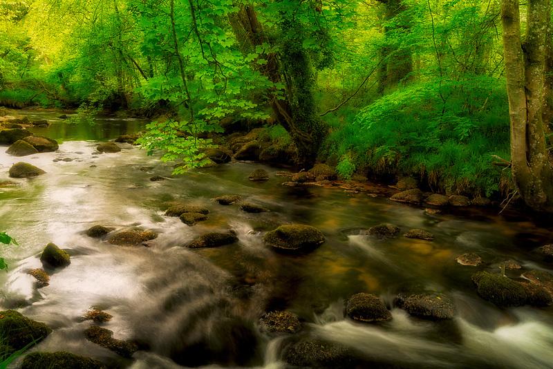 Spring growtth along Teign River Dartmoor National Park, England