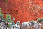 Red wall limestone along the North Kaibab Trail in Grand Canyon