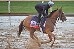 October 28, 2015 :  Dacita (CHI), trained by Chad C. Brown and owned by Sheep Pond Partners & Bradley Thoroughbreds, exercises in preparation for the Breeders' Cup Filly & Mare Turf at Keeneland Race Track in Lexington, Kentucky on October 28, 2015.  Scott Serio/ESW/CSM