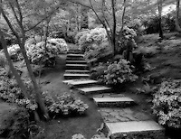 Azaleas blooming on pathway. Japanese Gardens. Portland, Oregon.
