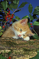 The worlds cutest kitten looking adorable with head on paws with holly berries