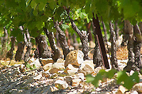 Soil detail. Stony. Calcareous. Vines. Mas Montel, Sommieres, Languedoc, France