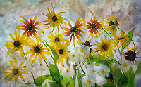 Bouquet of flowers  - anemone and daisies.