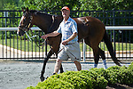 15 May 2010: Daylight Fire before winning the Malvern Hill hurdle at Strawberry Hill Races in New Kent, Va. Daylight Fire is owned by Falcon Racing and trained by Donald Yovanovich