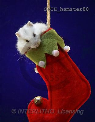 Xavier, CHRISTMAS ANIMALS, photos(SPCHhamster80,#XA#)