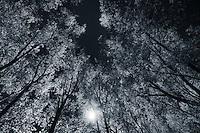 Light Trees