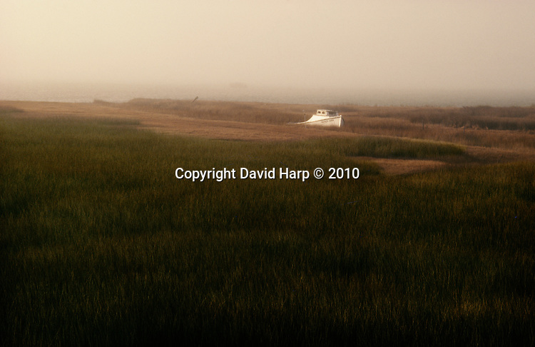 Nancy Ann,Tylerton, Marsh,wetland,spartina grasses,Smith Island,Chesapeake Bay
