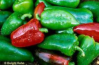 HS41-019x  Pepper - Lipstick variety, sweet pepper