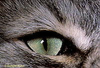 CT02-004z  Cat - eye close-up
