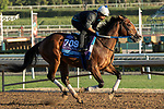 ARCADIA, CA  OCTOBER 25: Breeders' Cup Juvenile  entrant Shoplifted, trained by Steven M. Asmussen, exercises in preparation for the Breeders' Cup World Championships at Santa Anita Park in Arcadia, California on October 25, 2019..  (Photo by Casey Phillips/Eclipse Sportswire/CSM)