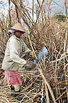 Mauritius, Flacq, near Centre de Flacq: local women cutting down sugar cane | Mauritius, Flacq, bei Centre de Flacq: Frauenarbeit - Zuckerrohrernte