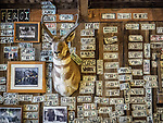 A mounted antelope trophy, photos and dollars with names cover the walls of the Paradise Valley Bar and Grill, Nevada