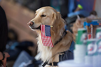 """The North Carolina Tar Heels bat dog """"Remington"""" holds an American Flag in his mouth during the National Anthem prior to the 2017 ACC Baseball Championship Game against the Florida State Seminoles at Louisville Slugger Field on May 28, 2017 in Louisville, Kentucky.  The Seminoles defeated the Tar Heels 7-3.  (Brian Westerholt/Four Seam Images)"""