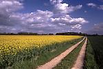DEU, Deutschland, Nordrhein Westfalen, Niederrhein, Xanten, Rapsfeld, Feldweg, Brassica napus var. napus, Pflanzenoele bilden den Ausgangsstoff fuer Biodiesel. Wichtigste Oelpflanze stellt in Deutschland der Raps dar. Grundsaetzlich koennen aber auch andere Oelpflanzen wie Sonnenblumen und Sojabohnen fuer die Herstellung von Biodiesel eingesetzt werden. Nach der Ernte wird die Rapssaat in Oelmuehlen zu Rapsoel gepresst. Je Hektar koennen ca. 1.500 Liter Pflanzenoel produziert werden. Der anfallende Rapsschrot geht als Eiweißlieferant in die Futtermittelindustrie. Im Gegensatz zu herkoemmlichen Dieselkraftstoffen enthaelt Biodiesel keinen Schwefel und ist biologisch schnell abbaubar...[Fuer die Nutzung gelten die jeweils gueltigen Allgemeinen Liefer-und Geschaeftsbedingungen. Nutzung nur gegen Verwendungsmeldung und Nachweis. Download der AGB unter http://www.image-box.com oder werden auf Anfrage zugesendet. Freigabe ist vorher erforderlich. Jede Nutzung des Fotos ist honorarpflichtig gemaess derzeit gueltiger MFM Liste - Kontakt, Uwe Schmid-Fotografie, Duisburg, Tel. (+49).2065.677997, fotofinder@image-box.com, www.image-box.com]
