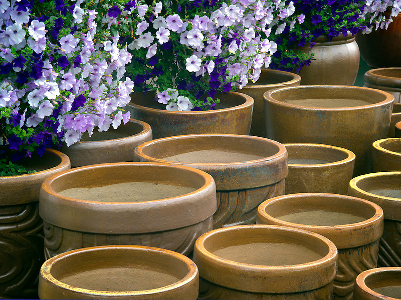 Pots and petunias.