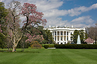 White House South Lawn and Blooming Magnolia Tree, Washington DC