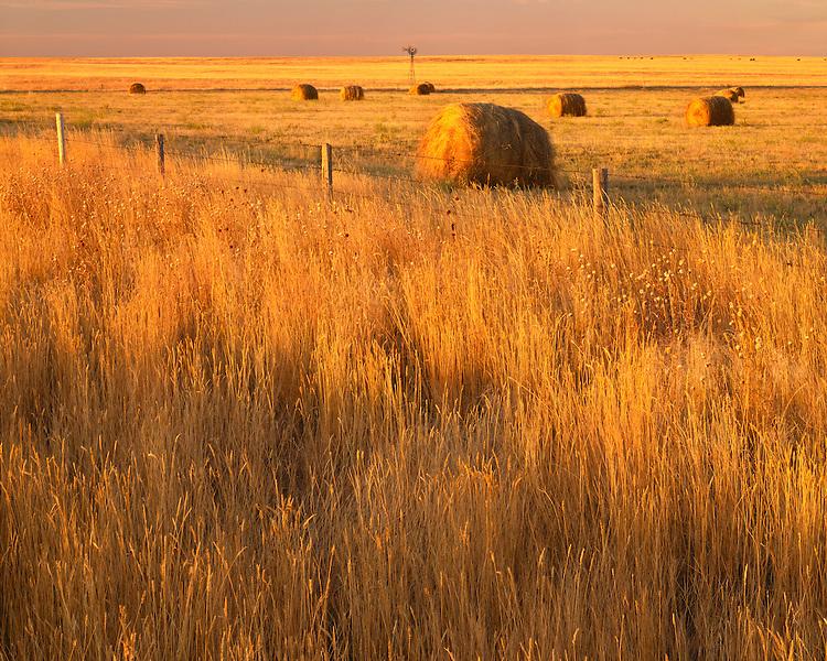 Sunrise light on grasslands and hayrolls; Sioux County; (Near) Harrison, NE