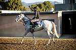 OCT 29: Breeders' Cup Mile entrant Lord Glitters, trained by David O'Meara, at Santa Anita Park in Arcadia, California on Oct 29, 2019. Evers/Eclipse Sportswire/Breeders' Cup