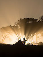 Sunburst  at sunrise through trees at Devil's Punchbowl State Natural Area. Oregon