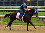 LOUISVILLE, KY - APRIL 23: Venus Valentine (Congrats x Valentine Fever, by Stormin Fever) gallops at Churchill Downs, Louisville KY with rider Maurice Sanchez in preparation for the Kentucky Oaks. Owner Rosemont Farm LLC, trainer Thomas A. Amoss. (Photo by Mary M. Meek/Eclipse Sportswire/Getty Images)