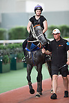 SHA TIN,HONG KONG-APRIL 27: Chautauqua ,trained by Michael Hawkes,is schooling in preparation for the Chairman's Sprint Prize at parade ring,Sha Tin Racecourse on April 27,2016 in Sha Tin,New Territories,Hong Kong (Photo by Kaz Ishida/Eclipse Sportswire/Getty Images)