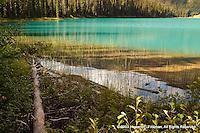 Yoho (British Columbia)