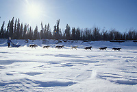 Martin Buser on Yukon River Near Ruby