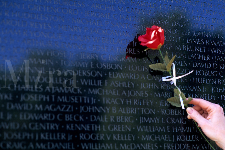Woman hand and rose remembering loss loved one at Vietnam Memorial Wall in Washington DC USA