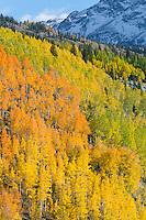 Aspen hillside near Silverton