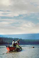 Subsistence fishermen check net while fishing for King salmon on the Yukon river, interior Alaska.